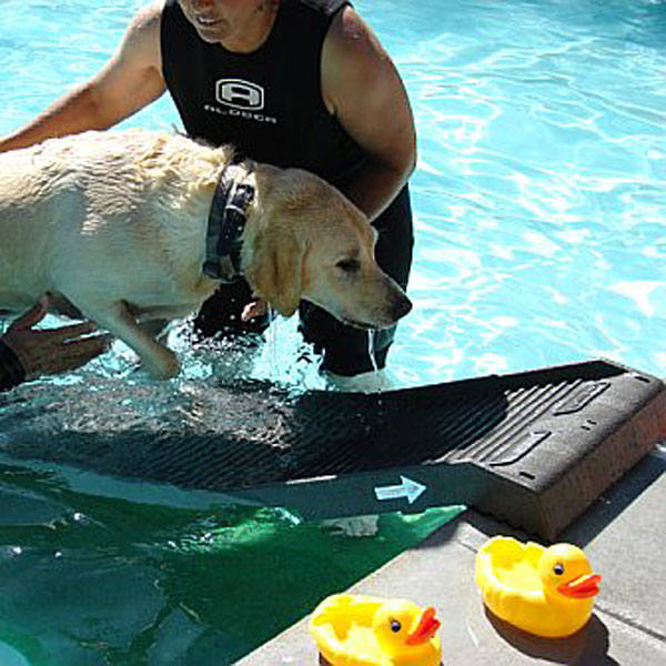 Dogs In Pools Pros And Cons Aqua Pearl Pools